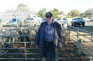 Torrita lamb producer Dennis Stone sold his crossbred lambs for $155 at Ouyen on Thursday.