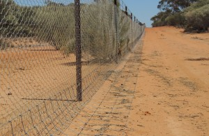 Dog proof fencing.