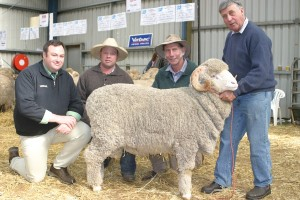 Glendonald Merino Stud principal Robert Harding holds the $21,000 ram he sold, with from left, Landmark agent Brad Wilson, and buyers Michael Hedger, Snowy Plain stud, and Michael Green, Boudjah stud.