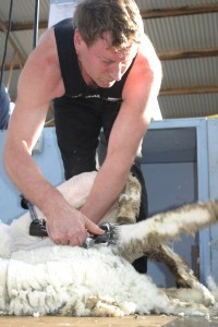 NZ shearer Tony Coster