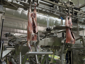Robotic lamb processing in JBS Australia's Bordertown, SA plant. Data captured from scanning technologies used in the process will be included in the new value chain digital strategy.