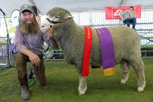 Murray Rogerson, Stirling Dohnes, Glenthompson, Vic, exhibited the reserve grand champion Dohne ram at the Australian Sheep and Wool Show.