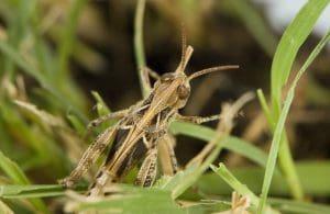 Locust WA 2016