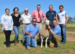 Joel Donnan, right, holds the $68,000 White Suffolk ram, with father Andrew, with from left, in the rear, Denita, Lauren and John Donnan, Elders stud stock auctioneer Ross Milne, and purchasers Geoff and Leroy Hull, Kattata Well stud, Pt Kenny, SA.