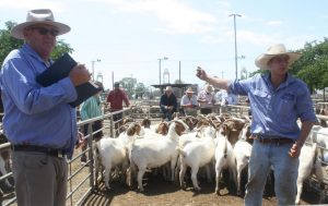 Boer goat wethers sell to $150, but less restocker interest